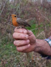 Gita con l'ornitologo